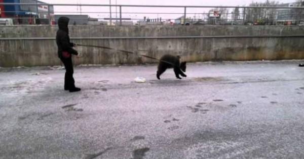 To είδαμε και αυτό: Γυναίκα βγάζει βόλτα με λουράκι την… αρκούδα της! (βίντεο)