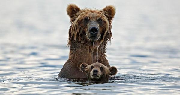 25 πολύ συναισθηματικές στιγμές ζωών στο ζωικό βασίλειο (Εικόνες)