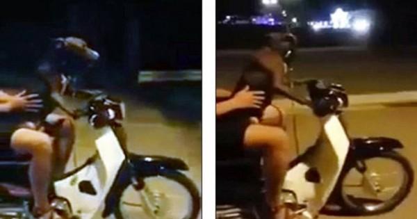 Εκπληκτικό: Σκύλος οδηγεί… μηχανάκι (Βίντεο)