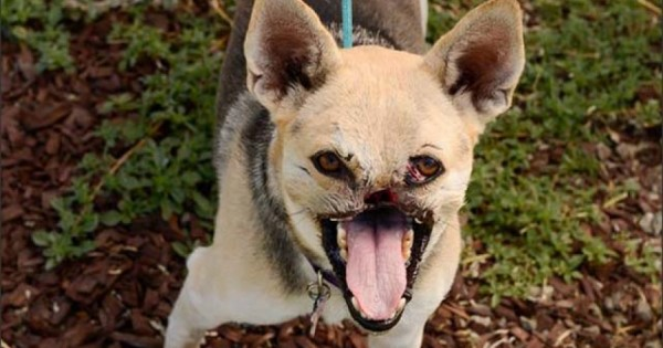 Η σκυλίτσα με το μισό πρόσωπο (Εικόνες)
