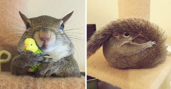 Σκίουρος διασώθηκε μετά από τυφώνα και γίνεται το πιο too cute μέλος της οικογένειας. (Εικόνες)