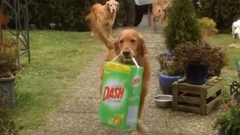 Οι σκύλοι βοηθούν με τα ψώνια (Βίντεο)
