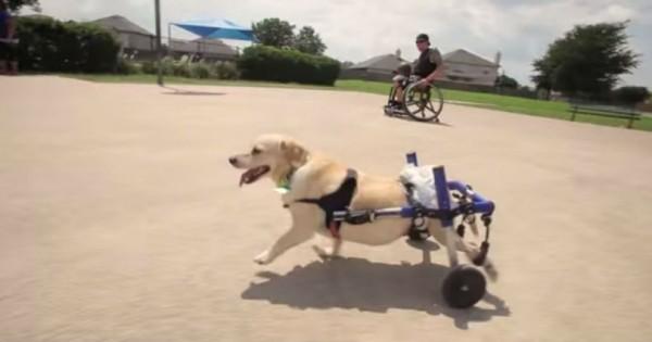 Άντρας με αναπηρία βρίσκει και σώζει σκύλο με αναπηρία , το γιατί θα σας κάνει να δακρύσετε… (Βίντεο)
