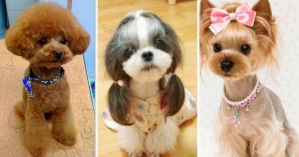 Όταν ένας σκύλος …χτενίζεται!!! (Εικόνες)