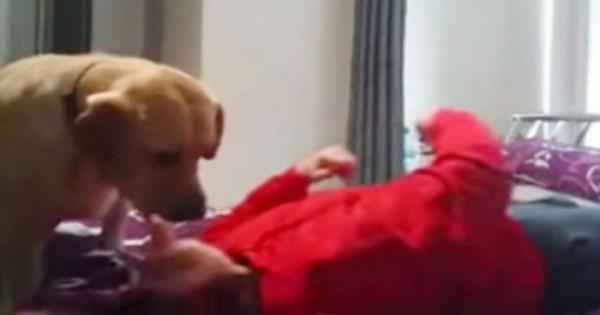 Σκύλος σώζει την ιδιοκτήτριά του από επιληπτική κρίση – Δείτε το βίντεο