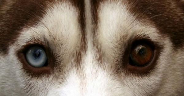 Τα 10 πιο εντυπωσιακά μάτια του ζωικού Βασιλείου! (Εικόνες)