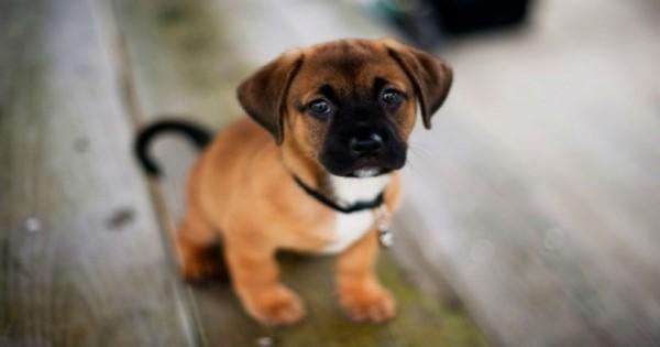9 Λόγοι για να αγκαλιάζεις το σκύλο σου περισσότερο συχνά.