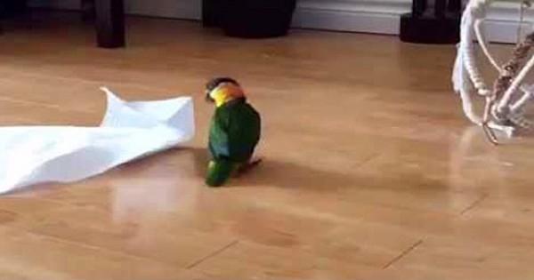 Τι γίνεται όταν ένας παπαγάλος βρίσκει μια χαρτοπετσέτα στο πάτωμα; (Βίντεο)