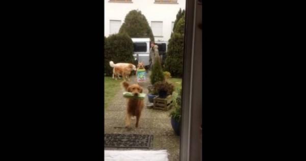Σε αυτό το σπίτι δεν λουφάρει κανείς- Ακόμη και τα σκυλιά βοηθούν στις δουλειές (βίντεο)