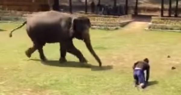 Ελέφαντας σώζει τον άντρα που τον φροντίζει μετά από επίθεση (Βίντεο)
