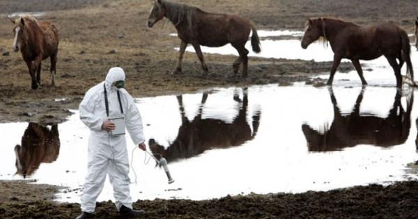 Επιστρέφει η άγρια ζωή στην εγκαταλελειμμένη πόλη του Τσέρνομπιλ