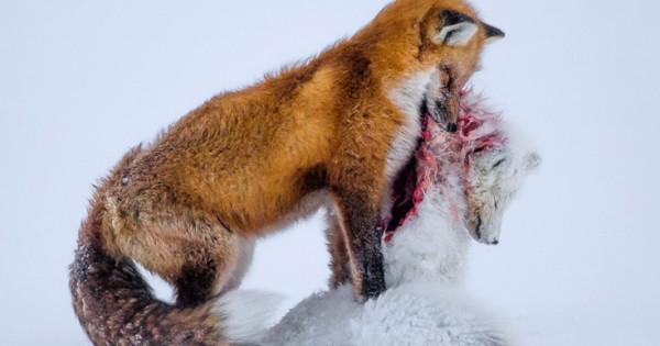 Η άγρια ζωή μέσα από τον φωτογραφικό φακό (Εικόνες)