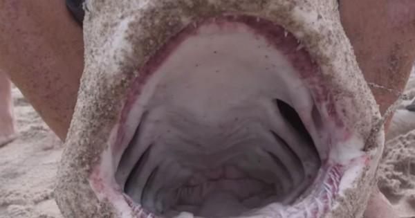 Τον δάγκωσε καρχαρίας και εκείνος επέστρεψε τον σκότωσε και τον έφαγε (Βίντεο)
