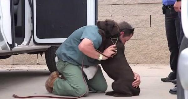 Μια φυλακισμένη γυναίκα μεγάλωσε αυτόν το σκύλο μέσα στην φυλακή. Δείτε τι έγινε όταν τον αποχαιρέτησε (Βίντεο)