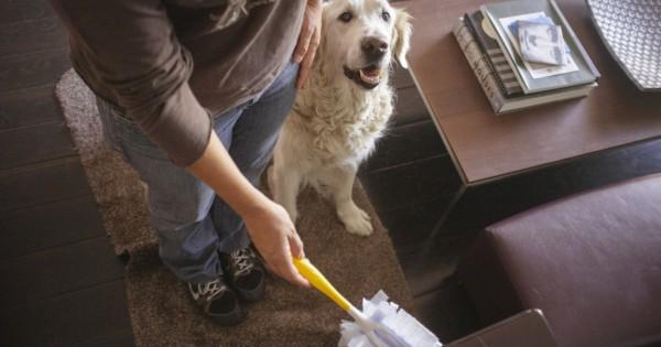 Εκπαιδεύστε το σκύλο καθαρίζοντας το σπίτι (Εικόνες)