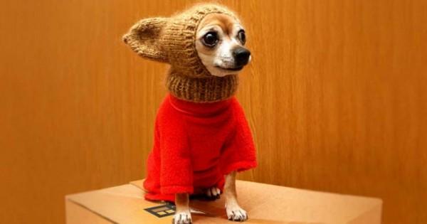 20 υπέροχα ζωάκια που είναι ήδη πανέτοιμα για το κρύο του χειμώνα! (Εικόνες)