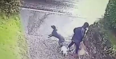 Βόλτα με τρεις σκύλους (Fail) (Βίντεο)