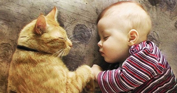 20 φωτογραφίες που αποδεικνύουν ότι τελικά οι γάτες είναι στοργικές ψυχούλες