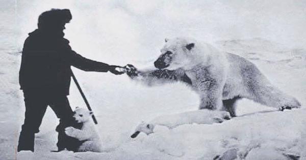 Όταν οι Σοβιετικοί τάιζαν… τις πολικές αρκούδες! (Εικόνες)