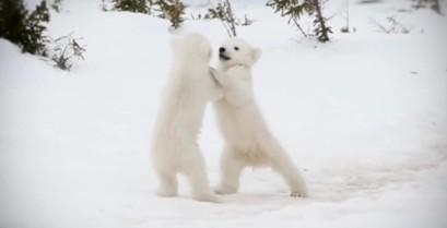 Χαρούμενα ζώα (Βίντεο)