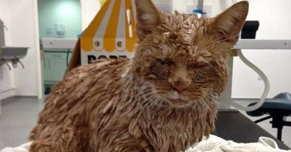 Βρήκε στην πόρτα της μια γάτα καλυμμένη με… τσιμέντο (Εικόνες)