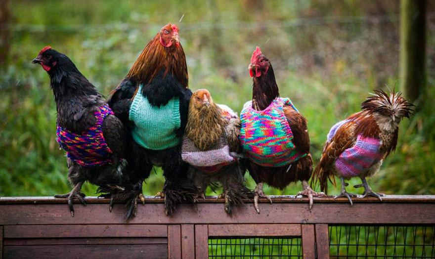 κοτόπουλα