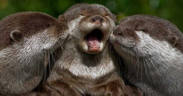 Βίδρες – τα ζώα που πραγματικά θα σας μάθουν τι σημαίνει τρυφερότητα (Εικόνες)
