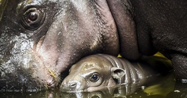 Το ντεμπούτο του νεογέννητου (Εικόνες)