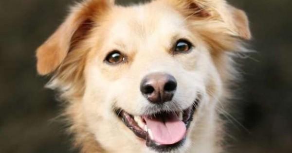 Τα σκυλιά κοιτούν τους ανθρώπους στα μάτια για να καταλάβουν τι θέλουν