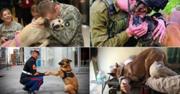 Τα σκυλιά είναι οι καλύτεροι φίλοι του ανθρώπου ακόμα και στον πόλεμο. (Φωτογραφίες)