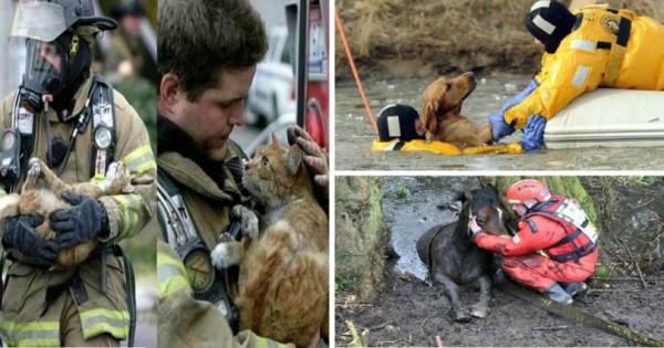 ΗΡΩΕΣ! Δείτε 18 Γενναίους πυροσβέστες τη στιγμή που σώζουν τις ζωές διαφόρων ζώων. (Εικόνες)