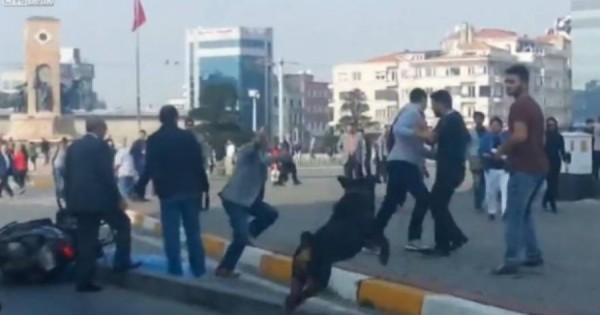 Σκύλος «χωρίζει» άνδρες που πιάστηκαν στα χέρια! [βίντεο]