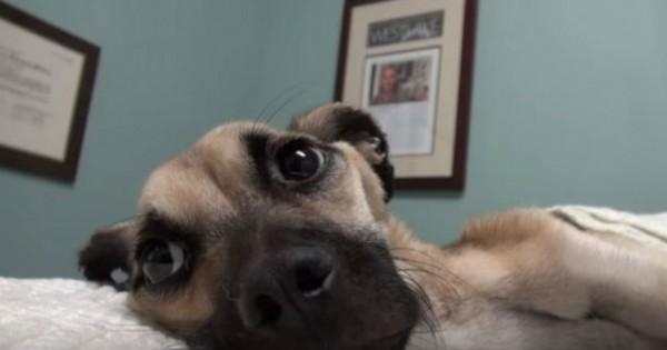 Αυτός ο σκελετωμένος σκύλος ήταν ένα βήμα πριν τον θάνατο – Η μεταμόρφωση του θα σας συγκινήσει! (Βίντεο)