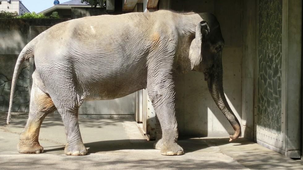 ελέφαντας