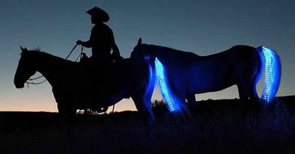 Ίππευε το άλογο του όταν ένα αυτοκίνητο ήρθε από πίσω. Δείτε όμως τι είχε το άλογο του στην… (Βίντεο)