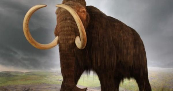 Η οστεοπόρωση εξαφάνισε τα μαμούθ