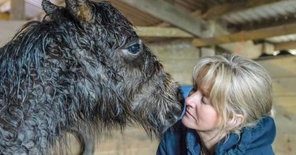 Η «γητεύτρια των αλόγων» έσωσε το μοναχικό πουλάρι (Φωτογραφίες)