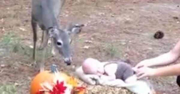 Ελάφι κάνει photobombing σε φωτογράφιση μωρού σε πάρκο και κλέβει την παράσταση! (Βίντεο)