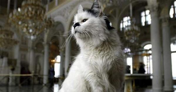 Οι γάτες του Ερμιτάζ -Μπήκαν με εντολή μιας τσαρίνας και μένουν ακόμη μέσα στο μουσείο, αιώνες μετά [εικόνες]