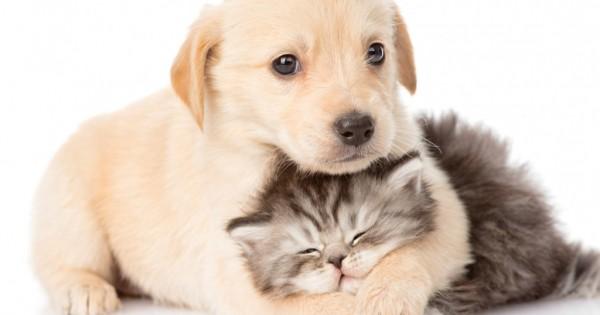Οι σκύλοι και οι γάτες έχουν και χάνουν τρίχα, αλλά γιατί;