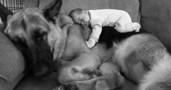 Ο καλύτερος φίλος των παιδιών. 25 υπέροχα παιδιά και ο αγαπημένος τους σκύλος!