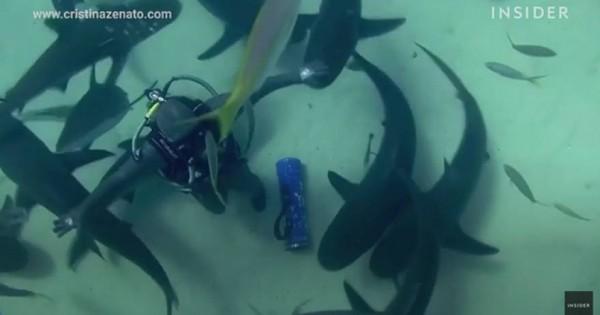 Ανατριχιαστικό: Χορεύει ανάμεσα σε δεκάδες καρχαρίες για να αποδείξει μια θεωρία (vid)