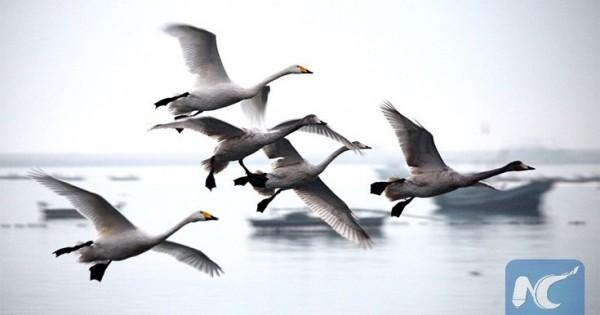Το μακρύ ταξίδι των μεταναστευτικών πουλιών (Εικόνες)
