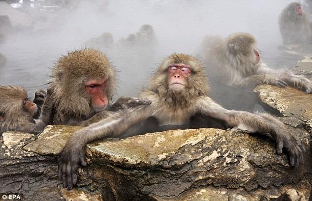 μαϊμούδες