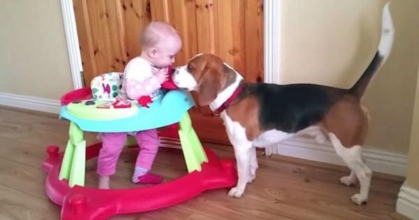 Όταν το μωρό τους γεννήθηκε, αρνήθηκαν να διώξουν το σκύλο τους. Δείτε τι κάνουν τώρα! (Βίντεο)