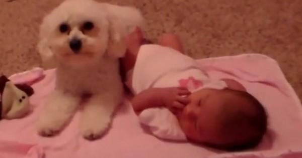 Το σκυλάκι προστατεύει το μωρό από… την σκούπα! (Βίντεο)