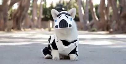 Σκύλος με στολή Stormtrooper (Βίντεο)