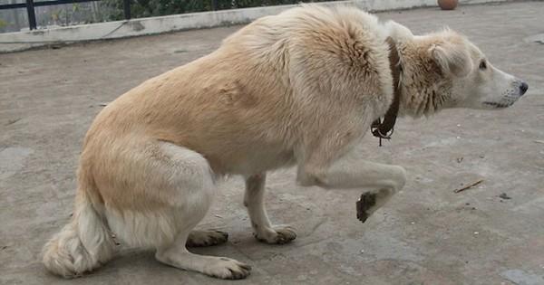Αν δείτε ποτέ το σκύλο σας να κάνει ΑΥΤΟ, τότε προσπαθεί να σας πει κάτι πολύ σημαντικό (Εικόνες)
