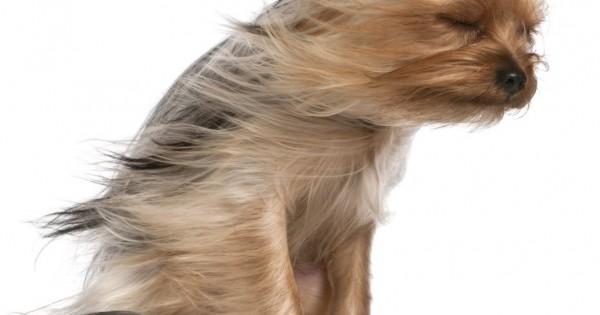 10 αλήθειες για τις τρίχες που χάνουν οι τετράποδοι