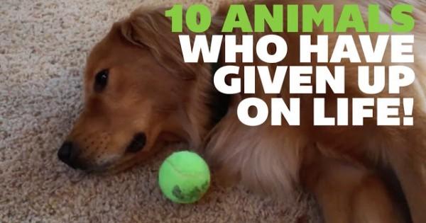 Ξεκαρδιστικο βιντεο:10 ζωα που εχουν παραιτηθει απο την ζωη!